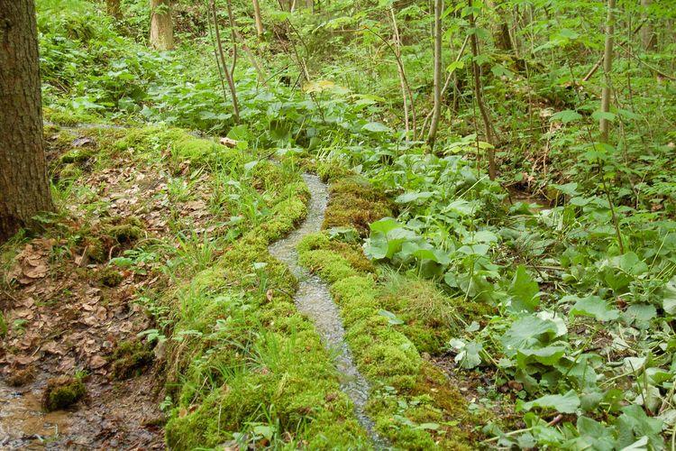 Outdoorsex Rohrbach-Berg Inserat